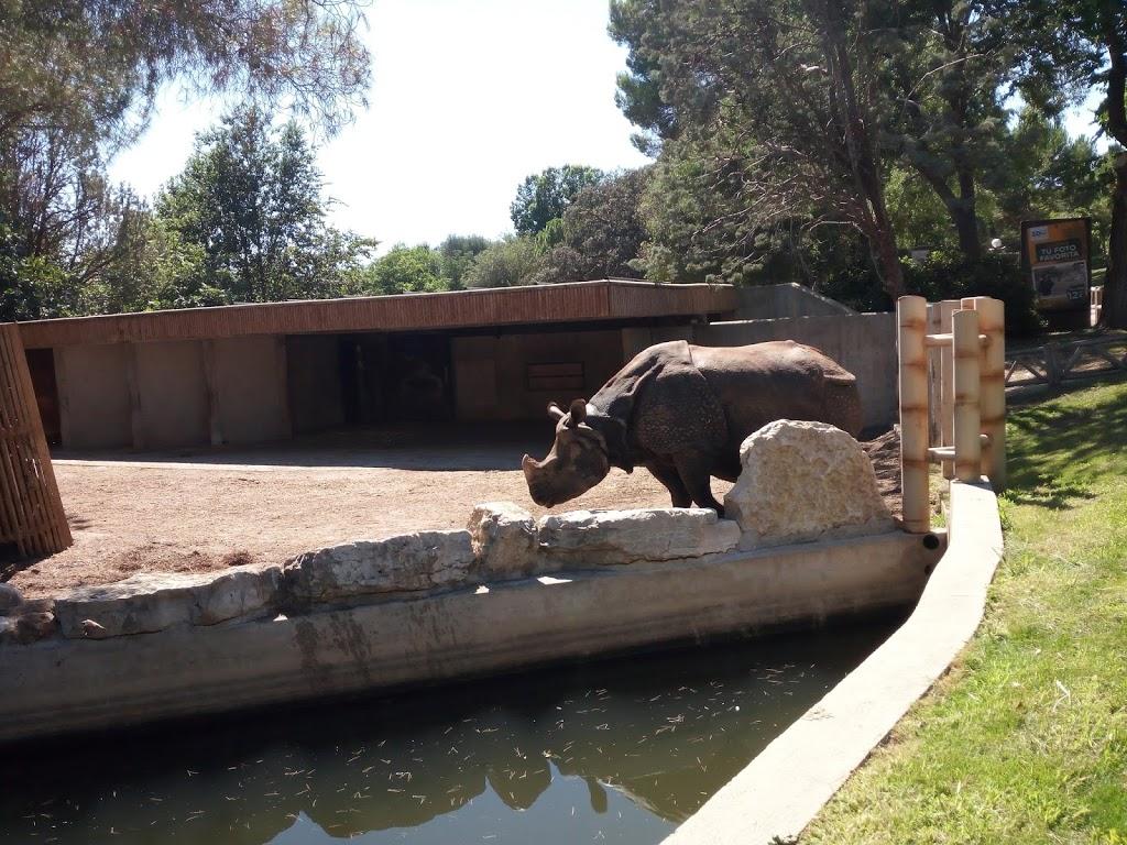 ¡El Zoo  Aquarium de Madrid es uno de los más antiguos del mundo!