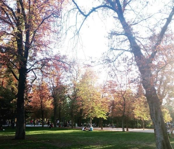 Disfruta de los colores del otoño en Madrid