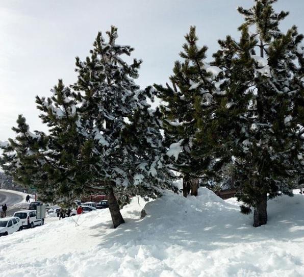 Blanca nieve de Puerto Coto #Invierno